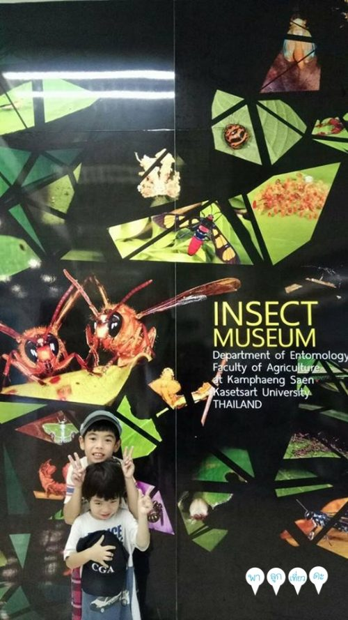 insect1-11